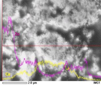 マルチTZの断面写真(SEM観察-LINE分析)